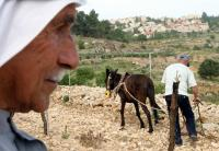 Palestinian farmer